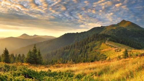 trees-on-the-mountains-692-600x340