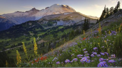 Sourdough_Trail_Sunset_Flowers_Mount_Rainier_Washington