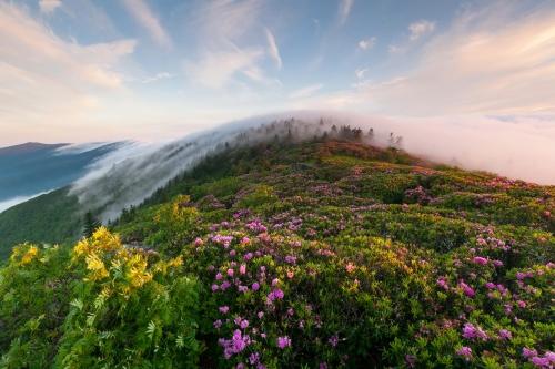mountain-flowers-244776