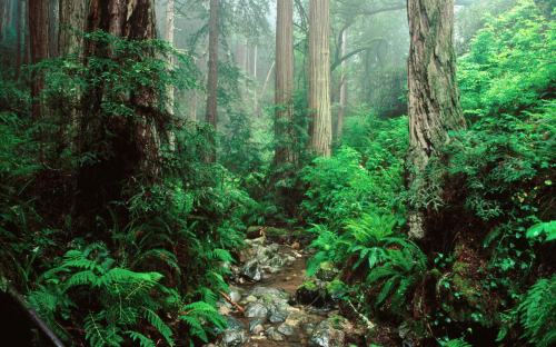 olympic-national-forest-park
