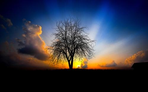 sunsets - w311
