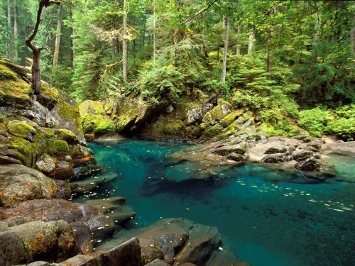 Ohanapecosh River, Mt. Rainier National Park, Washington