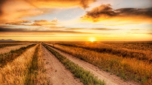 the_lonely_road