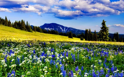 Trophy Meadows, Wells Gray Provincial Park, British Columbia, Canada