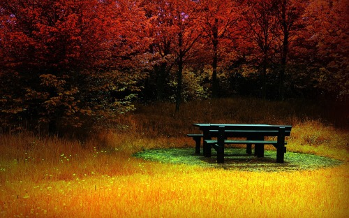 Autumn Picnic
