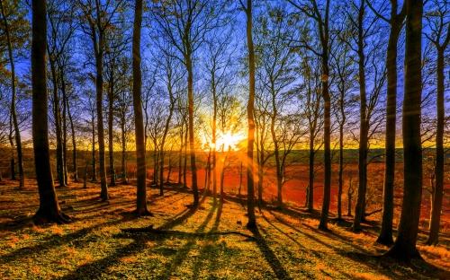 Forest Sunburst
