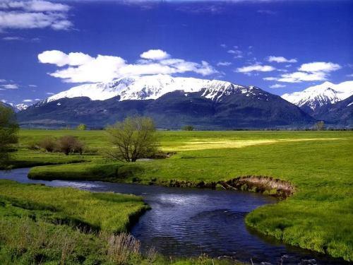 meadowandriver