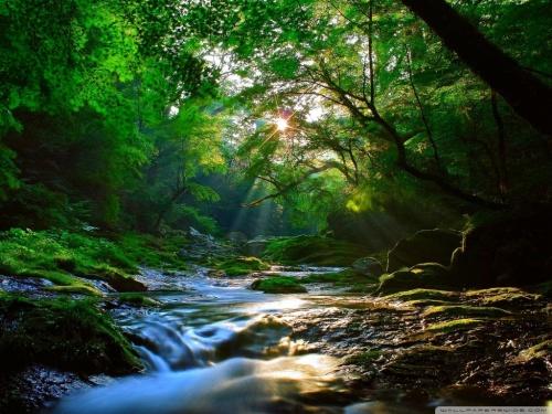 beautiful_sunlight_at_forest-wallpaper-1024x768