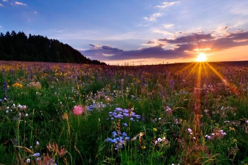 Co Meadow