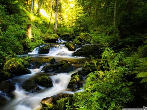 forest_creek-wallpaper-1280x960