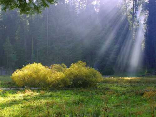 sunbeam_meadow
