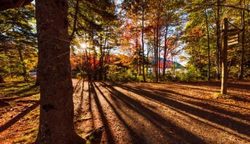 Acadia fall