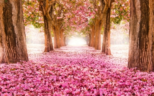 Blossom Alley