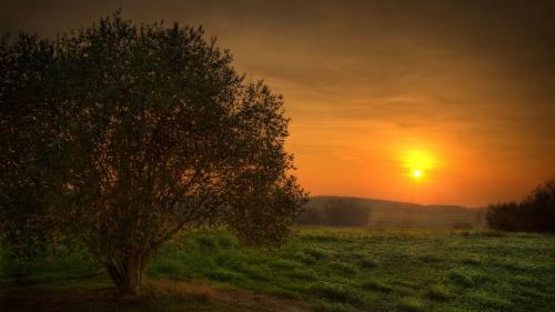 Landscape; Nature