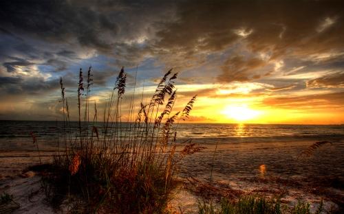 beachrise