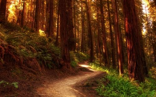Redwoodtrail